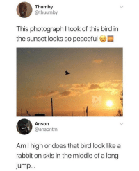 Amazing: Thumby  @thuumby  This photograph I took of this bird in  the sunset looks so peaceful  Anson  @ansontm  Am l high or does that bird look like a  rabbit on skis in the middle of a long  jump Amazing