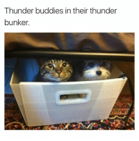 @hilarious.ted is an animal memes legend 🙌: Thunder buddies in their thunder  bunker.  g. @hilarious.ted is an animal memes legend 🙌