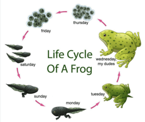 Me irl: thursday  friday  Life Cycle  Of A Frog  wednesday  saturday  my dudes  W/moomarlee  tuesday  sunday  monday Me irl