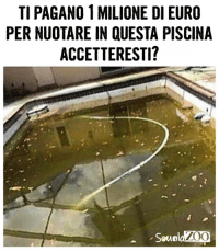 Memes, Money, and Euro: TI PAGANO 1 MILIONE DI EURO  PER NUOTARE IN QUESTA PISCINA  ACCETTERESTI?  Seuola Voi lo fareste? piscina nuotare soldi money