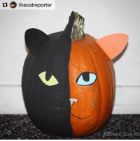 Halloween, Instagram, and Internet: ti thecat reporter  Katniss, Cat Re Ck out this painted pumpkin from last year.... 🎃🎃 Repost @thecatreporter with @repostapp ・・・ FAMOUS INTERNET CAT PUMPKINS - @venustwofacecat catart lolcatsofinstagram lolcats cat cats lolcatsofinstagram halloween halloweencats katnisscatreporter catpumpkin catpumpkins catsofinstagram cats_of_instagram