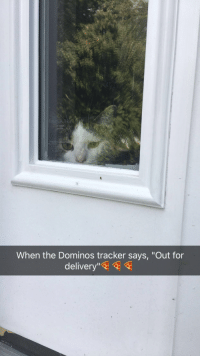 """MEOW_IRL: TI  When the Dominos tracker says, """"Out for  delivery"""" MEOW_IRL"""