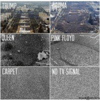 Memes, Pink Floyd, and Queen: TIBUMP  QUEEN  PINK FLOYD  CARPETNO T SIGNAL fkno