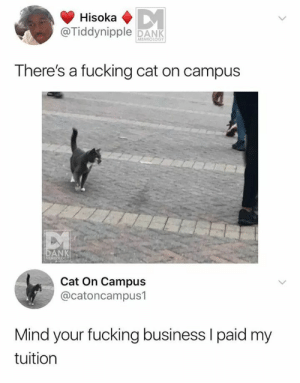 Dank, Fucking, and Business: @Tiddynipple DANK  MEMEOLOGY  There's a fucking cat on campus  DANK  Cat On Campus  @catoncampus1  Mind your fucking business l paid my  tuition