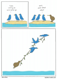 """<p>Wholesome birds via /r/wholesomememes <a href=""""http://ift.tt/2ws1Voo"""">http://ift.tt/2ws1Voo</a></p>: tides  coming up.  we'd better go  Wai t  what obout  mike?  O liz climdo  lizclimo. tumblr.com <p>Wholesome birds via /r/wholesomememes <a href=""""http://ift.tt/2ws1Voo"""">http://ift.tt/2ws1Voo</a></p>"""