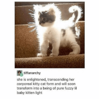 just wrote a chapter for the book I'm writing and I'm pretty chuffed with it ngl: tiffanarchy  she is enlightened, transcending her  corporeal kitty cat form and will soon  transform into a being of pure fuzzy lil  baby kitten light just wrote a chapter for the book I'm writing and I'm pretty chuffed with it ngl