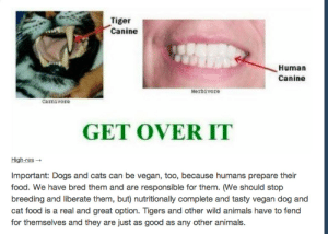 Animals, Beautiful, and Bodies : Tiger  Canine  Human  Canine  Herbivore  carnivore  GET OVER IT  High-res  Important: Dogs and cats can be vegan, too, because humans prepare their  food. We have bred them and are responsible for them. (We should stop  breeding and liberate them, but) nutritionally complete and tasty vegan dog and  cat food is a real and great option. Tigers and other wild animals have to fend  for themselves and they are just as good as any other animals. sj-circlejerk:  jonaki:  bravelittletoreador:  pettyartist:  lxndr5:  lord-kitschener:  The teeth are different because humans ate different forms of prey and caught them differently. A tiger needs its teeth to hold onto struggling prey, while humans have more usable limbs. also CATS CANNOT BE VEGAN THEY ARE OBLIGATE CARNIVORES AND IF YOU MAKE THEM LIVE ON PLANTS YOU WILL FORCE THEM TO GO BLIND AND DIE FOR THE SAKE OF SHOWING HOW MUCH YOU CARE ABOUT ANIMALS CATS CANNOT BE VEGAN CATS CANNOT BE VEGAN   Jesus Christ, yeah no, cats can never be vegetarian or vegan jesus goddamn motherfucker.  CATS NEED TAURINE CATS NEED TAURINE FROM MEAT PROTEINS DO NOT MAKE YOUR CAT EAT A VEGETARIAN/VEGAN DIET  Cannot reblog this enough. Cats can not produce the amino acid taurine in their bodies. They must get it from their diet, or they will go blind and die, slowly and horribly. You have the ability and the right to choose a vegan or vegetarian life style and people should respect that choice. Your pet does not have that ability, and can not make that choice. Please do not force it on them, any more than you would allow someone to force a diet not of your choosing on you. If you find it morally objectionable to feed your pets food containing animal products, then perhaps you should consider choosing an herbivorous pet such as a rabbit or other small rodent. For the same reason I can't keep snakes, even though I think they're beautiful, because I can not handle their diet, if you can not handle feeding your cat animal products, you should find it a home with someone who can.  cats and dogs can be vegan too because humans prepare their food how can someone even conceive of something as mind-numbingly stupid as this sentence also, defining a species' diet based on the shape of their teeth? wow that's some einstein shit right here  Feeding carnivorous pets a vegan diet should constitute as animal cruelty and people who do so should lose the right to own pets.
