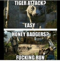 Fucking, Lol, and Memes: TIGERATTACK?  EASY  HONEY BADGERS?  FUCKING RUN Far cry games lol Follow me @jaxramse for daily content Check out @cod.place @gamiing.memes @gamersbanter @gamingposts.ig @thecodgamers cod codmeme codmemes callofduty callofdutymeme callofdutymemes gfuel game infinitewarfare IW Rs6 rainbow6siege mwr gaming gamingmemes gamer battlefield battlefield1 gta gtav gta5 gtavonline bo2 bo3 csgo modding xbox xboxone ps4 pc