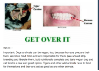 """Animals, Bad, and Cats: TigerI  Canine  Human  Canine  Herbivore  carnIvore  GET OVER IT  High-res  Important: Dogs and cats can be vegan, too, because humans prepare their  food. We have bred them and are responsible for them. (We should stop  breeding and liberate them, but) nutritionally complete and tasty vegan dog and  cat food is a real and great option. Tigers and other wild animals have to fend  for themselves and they are just as good as any other animals. <p><a class=""""tumblr_blog"""" href=""""http://no-hate-for-snape.tumblr.com/post/40953997308/spacedoutsparrow-dovahkunt-ashlands"""">no-hate-for-snape</a>:</p> <blockquote> <p><a class=""""tumblr_blog"""" href=""""http://spacedoutsparrow.tumblr.com/post/40894977632"""">spacedoutsparrow</a>:</p> <blockquote> <p><a class=""""tumblr_blog"""" href=""""http://dovahkunt.tumblr.com/post/40879636848/ashlands-tarlkhir-grimalken"""">dovahkunt</a>:</p> <blockquote> <p><a class=""""tumblr_blog"""" href=""""http://ashlands.tumblr.com/post/40878194575/tarlkhir-grimalken-lord-kitschener"""">ashlands</a>:</p> <blockquote> <p><a class=""""tumblr_blog"""" href=""""http://tarlkhir.tumblr.com/post/40877809149/grimalken-lord-kitschener-the-difference"""">tarlkhir</a>:</p> <blockquote> <div> <p><a class=""""tumblr_blog"""" href=""""http://grimalken.tumblr.com/post/40876735569/lord-kitschener-the-difference-in-teeth-is"""">grimalken</a>:</p> <blockquote> <div> <div> <p><a class=""""tumblr_blog"""" href=""""http://lord-kitschener.tumblr.com/post/40810695083/the-difference-in-teeth-is-because-humans-ate"""">lord-kitschener</a>:</p> <blockquote> <div> <div> <p>The difference in teeth is because humans ate different forms of prey and caught them differently. A tiger needs its teeth to hold onto struggling prey, while humans have more usable limbs.</p> <p>also CATS CANNOT BE VEGAN THEY ARE OBLIGATE CARNIVORES AND IF YOU MAKE THEM LIVE ON PLANTS YOU WILL FORCE THEM TO GO BLIND AND DIE FOR THE SAKE OF SHOWING HOW MUCH YOU CARE ABOUT ANIMALS</p> <p>CATS CANNOT BE VEGAN</p> <p><strong><big><big>CATS</big></big></stron"""