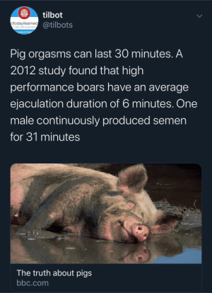 No wonder why Ms. Piggy was always horny: tilbot  todayilearned@tilbots  17,282,198 subscribers  SUBSCRIBE  Pig orgasms can last 30 minutes. A  2012 study found that high  performance boars have an average  ejaculation duration of 6 minutes. One  male continuously produced semen  for 31 minutes  The truth about pigs  bbc.com No wonder why Ms. Piggy was always horny