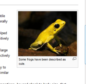 Cute, Tumblr, and Wikipedia: tile  rally  lped  itively  large  ctively  Some frogs have been described as 6  cute  y to  imilar ohnosiro: Wikipedia stoically acknowledges the cuteness of frogs.