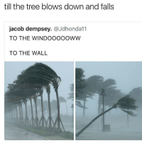 Memes, Tree, and 🤖: till the tree blows down and falls  jacob dempsey. @Jdhonda11  TO THE WINDOOOOOWW  TO THE WALL This what we not gon do
