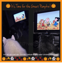 """Woo! #FiveSibes are watching """"It's the Great Pumpkin, Charlie Brown"""" on @ABCNetwork! 🎃 #Peanuts #TheGreatPumpkin #CharlieBrown: Time for the Great Pimpkin  FIVESIBES.BLOGSPOT.COM ~FIVESIBES SIBERIAN HUSKY kg NEWS & REVIEWS ON 00K Woo! #FiveSibes are watching """"It's the Great Pumpkin, Charlie Brown"""" on @ABCNetwork! 🎃 #Peanuts #TheGreatPumpkin #CharlieBrown"""