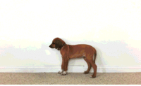 Funny, Growing Up, and Time: Time lapse of a dog growing up.