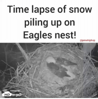 Time lapse shows 30 hours of snow piling up on an eagles' nest during the snow storm in Pennsylvania as an eagle patiently keeps two eggs warm under there. The first eaglet is due to hatch on Friday! (Via @HDOnTAP): Time lapse of snow  piling up on  Eagles nest!  apmwhiphop  HD Time lapse shows 30 hours of snow piling up on an eagles' nest during the snow storm in Pennsylvania as an eagle patiently keeps two eggs warm under there. The first eaglet is due to hatch on Friday! (Via @HDOnTAP)