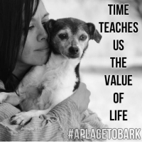 "Memes, 🤖, and Beloved: TIME  TEACHES  US  THE  VALUE  LIFE  HAPLACETOBARK Sorry I have been so erratic with my posts... A huge workload & a beloved dog, who is in her last days, makes it difficult for me to write. ""Taffy"" my 20 year old dog is blind, deaf, has cancer & is in renal failure. I'm trying to spend some quality time with her & the heartbreak of saying goodbye is a tough thing. She was my very first rescue, when I started ""A Place To Bark"" 18 years ago... Her story compelling & why I chose, more difficult dogs, behaviorally challenged dogs to work with, early on. I'll write more in length another day. For now, please know, we are busy as always & my first priority is to keep the life cycle going.  So even though I'm not posting, we are still taking dogs in from animal controls, caring for them & moving them forward to adoption. It's just been difficult to write the past few weeks, with so much on my plate.  Much Love to you all... Please know I think about writing everyday, I'm just struggling a bit emotionally. But I'll be back soon💕  (This photo was taken 4 years ago, when ""Taffy"" was 16) The quote ""Time teaches us the value of Life, can also be reversed to say ""Life teaches us, the value of Time"" Cherish Every Moment❤️ Photo Credit: Joseph Frazz Photography  #lifechallenges #findingbalance #iwishpetscouldliveforever  #aplacetobark"
