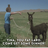 Dank, Napoleon Dynamite, and 🤖: TINA YOU FAT LARD.  COME GET SOME DINNER! Get yourself a heaping helping of Napoleon Dynamite. It's on now.