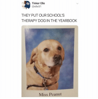 my friend ___sext___ got hacked follow her new account @etahad: Tinker Elle  @elle91  THEY PUT OUR SCHOOL'S  THERAPY DOG IN THE YEARBOOK  Miss Peanut my friend ___sext___ got hacked follow her new account @etahad