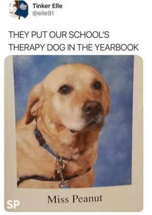 A helpful doggo by Theorange-of-anxiety MORE MEMES: Tinker Elle  @elle91  THEY PUT OUR SCHOOL'S  THERAPY DOG IN THE YEARBOOK  Miss Peanut  SP A helpful doggo by Theorange-of-anxiety MORE MEMES