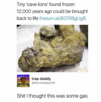 Frozen, Life, and Memes: Tiny 'cave lions' found frozen  12,000 years ago could be brought  back to life thesun.uk/6010BgUg6  trap daddy  @terminallychill  Shit I thought this was some gas Light that ish up! 🔥