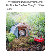 Follow my backup @petroom (Swipe for more) - - 📷 @hedgehog_azuki: Tiny Hedgehog Goes Camping, And  His Pics Are The Best Thing You'll See  Today Follow my backup @petroom (Swipe for more) - - 📷 @hedgehog_azuki
