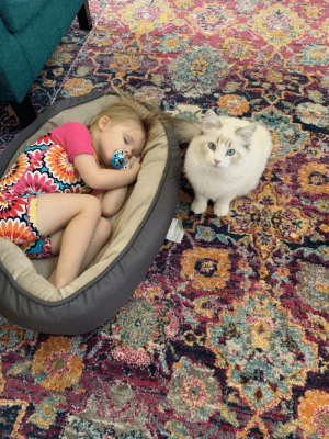 Tiny human steals cat's bed at nap time.: Tiny human steals cat's bed at nap time.
