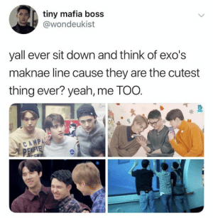 EXO memes: tiny mafia boss  @wondeukist  yall ever sit down and think of exo's  maknae line cause they are the cutest  thing ever? yeah, me TOO.  CAMP  APC EXO memes