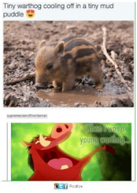Memes, 🤖, and Mud: Tiny warthog cooling off in a tiny mud  puddle  S  supremeruleroftheinternet:  Wien was a  young Wuriog  It f  Postize