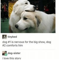 Comfortable, Ironic, and Big Show: tinybed  dog #1 is nervous for the big show, dog  #2 comforts him  Ke dog-sister  i love this story