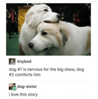 Friends, Love, and Memes: tinybed  dog #1 is nervous for the big show, dog  #2 comforts him  dog-sister  i love this story me when I try to comfort my friends - Max textpost textposts