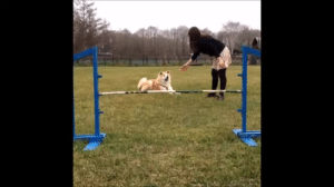tinytheursaring: computervsworld: as we all know, the best vines are the ones with dogs. here's a bunch of doggy vines!!!!!! i reblogged this to my main too but y'all need to see this : tinytheursaring: computervsworld: as we all know, the best vines are the ones with dogs. here's a bunch of doggy vines!!!!!! i reblogged this to my main too but y'all need to see this