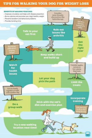 Dogs, Family, and Memes: TIPS FOR WALKING YOUR DOG FOR WEIGHT LOSS  BENEFITS OF WALKING YOUR DOG:  . Improves circulation and helps with disease prevention  Burns calories and promotes your dog's healthy weight  Consider  joint-friendly  alternatives like  hydrotherapy  Prevents boredom and behavioral problems  Provides bonding time  Opt for a  instead ofa  Talk to your  vet first  Rule out  issues like  arthritis  Get  the  right  gear  ng  limping  fatigue  Keep walks short  and build up  Watch  for  health  issues  Consider apples,  carrots or  low-calorie  dog treats  Let your dog  pick the path  Limit the  treats  Get the family  together or walk  with another dog  Incorporate  training  Do a  group walk  Stick with the vet's  diet and exercise plan  Ask your pup  to sit or stay  the  Try a new walking  location next timel Robin