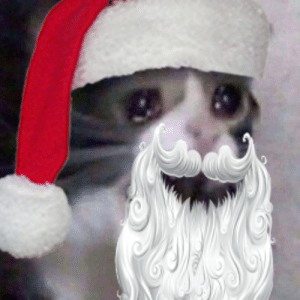 Tis the season of crying cat.: Tis the season of crying cat.