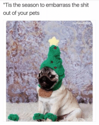"""Tis the Season, Dank Memes, and Embarrassed: """"Tis the season to embarrass the shit  out of your pets  ShitheadSteve @mememojiapp is gonna be the top meme account of 2017"""