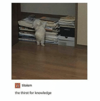 it's like........a tiny furry human....???? - Max textpost textposts: titoism  the thirst for knowledge it's like........a tiny furry human....???? - Max textpost textposts