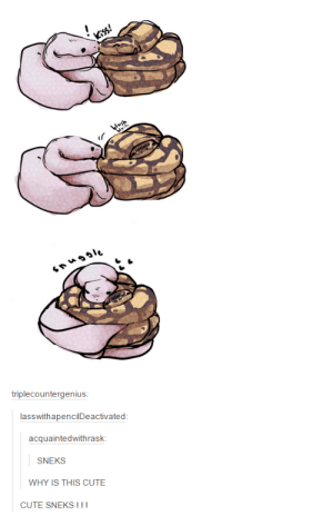 So cuteomg-humor.tumblr.com: tl  011  triplecountergenius  lasswithapencilDeactivated  acquaintedwithrask  SNEKS  WHY IS THIS CUTE  CUTE SNEKS III So cuteomg-humor.tumblr.com
