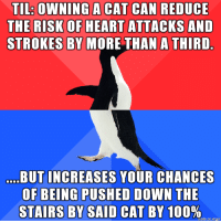 "advice-animal:  The ""benefits"" of owning a cat…: TL: OWNING A CAT CAN REDUCE  THE RISK OF HEART ATTACKS AND  STROKES BY MORE THAN A THIRD  BUT INCREASES YOUR CHANCES  OF BEING PUSHED DOWN THE  STAIRS BY SAID CAT BY 100%,  made on imgur advice-animal:  The ""benefits"" of owning a cat…"