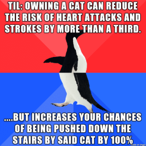 The benefits of owning a cat: TL: OWNING A CAT CAN REDUCE  THE RISK OF HEART ATTACKS AND  STROKES BY MORE THAN A THIRD  BUT INCREASES YOUR CHANCES  OF BEING PUSHED DOWN THE  STAIRS BY SAID CAT BY 100  %,  made on imgur The benefits of owning a cat
