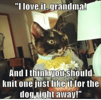 "Anaconda, Fresh, and Grandma: Tlove it, grandma!  And Ithinikyoushoul  Knit one just like it for the  dog right away!"" 15 Fresh Animal Memes That Will Make Your Day 100% Better"