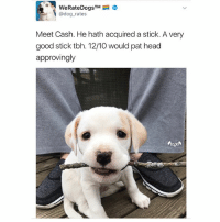 Animals, Cute, and Cute Animals: TM  @dog rates  Meet Cash. He hath acquired a stick. A very  good stick tbh. 12/10 would pat head  approvingly SWIPE & TAG ❤️ follow me @v.cute.animals 👈👈 @drsmashlove