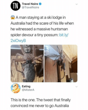 witnessed: TN  Travel Noire  @TravelNoire  A man staying at a ski lodge in  Australia had the scare of his life when  he witnessed a massive huntsman  spider devour a tiny possum: bit.ly/  2xiOwyB  Eating  @MisterA  This is the one. The tweet that finally  convinced me never to go Australia