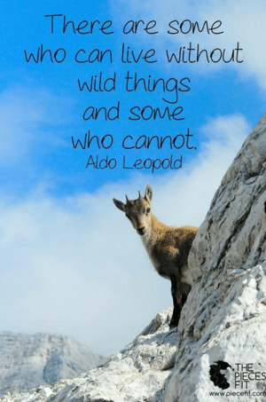 Memes, Live, and Wild: Tnere are sOwe  who can live without  wild things  and some  who cannot  Aldo Leopold  THE  ECES  FIT  www.piecefit.com