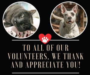 It's National Volunteer Week, and we want to take a moment to say thank you to the wonderful volunteers who help out Pawsitive Alliance all year round. Without you, we couldn't do the work that we do - whether it's helping out with events or fundraising, taking amazing photographs of our #WhynotMEpets, writing adorable posts for sharing about the pets on social media, helping with spay/ neuter and pet retention initiatives and educating our communities (the list could go on)- we appreciate you! This also includes our amazing board who go above and beyond to improve animal welfare initiatives and the lives of people and pets every day. Thank you!  If you're interested in learning more about volunteer opportunities with Pawsitive Alliance, go to: http://www.pawsitivealliance.org/volunteer.html  #WhynotMEpets featured in post: Gracie Seattle Humane and Aurora Pasado's Safe Haven Dirtie Dog Photography Healthy Paws Pet Insurance: TO ALL OF OUR  VOLUNTEERS, WE THANK  NDAPPRECIATI 01 ! It's National Volunteer Week, and we want to take a moment to say thank you to the wonderful volunteers who help out Pawsitive Alliance all year round. Without you, we couldn't do the work that we do - whether it's helping out with events or fundraising, taking amazing photographs of our #WhynotMEpets, writing adorable posts for sharing about the pets on social media, helping with spay/ neuter and pet retention initiatives and educating our communities (the list could go on)- we appreciate you! This also includes our amazing board who go above and beyond to improve animal welfare initiatives and the lives of people and pets every day. Thank you!  If you're interested in learning more about volunteer opportunities with Pawsitive Alliance, go to: http://www.pawsitivealliance.org/volunteer.html  #WhynotMEpets featured in post: Gracie Seattle Humane and Aurora Pasado's Safe Haven Dirtie Dog Photography Healthy Paws Pet Insurance