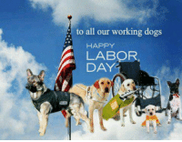 Happy Labor Day! ~ Lea: to all our working dogs  HAPPY  A DAY. Happy Labor Day! ~ Lea