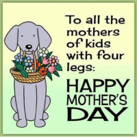 Dank, Mother's Day, and Happy: To all the  mothers  of kids  with four  legs:  HAPPY  MOTHER'S  DAY #jussayin