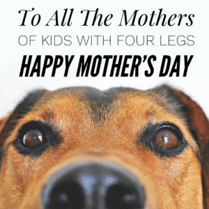 Pets are family too 💕💕: To All The Mothers  OF KIDS WITH FOUR LEGS  HAPPY MOTHER'S DAY Pets are family too 💕💕