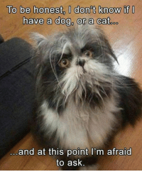 Oh hai. Here's some food. See you after work. Good boy...er...girl...dog...cat...I love you. Don't eat me. +gnosis #cats #dogs #haha #cfp: To be honest  O don't know if  have a dog, or a cat  oo  and at this point I'm afraid  to ask Oh hai. Here's some food. See you after work. Good boy...er...girl...dog...cat...I love you. Don't eat me. +gnosis #cats #dogs #haha #cfp
