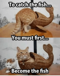 This is a whale done post. Follow @9gag @9gagmobile 9gag instacat mermaid catfish: To catch the fish  You must first...  Become the  fish This is a whale done post. Follow @9gag @9gagmobile 9gag instacat mermaid catfish