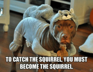 This shit is messing my dog.: TO CATCH THE SQUIRREL, YOU MUST  BECOME THE SQUIRREL. This shit is messing my dog.