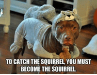 Memes, 🤖, and Journeys: TO CATCH THE SQUIRREL YOUMUST  BECOME THE SQUIRREL The journey may still be Rocky.